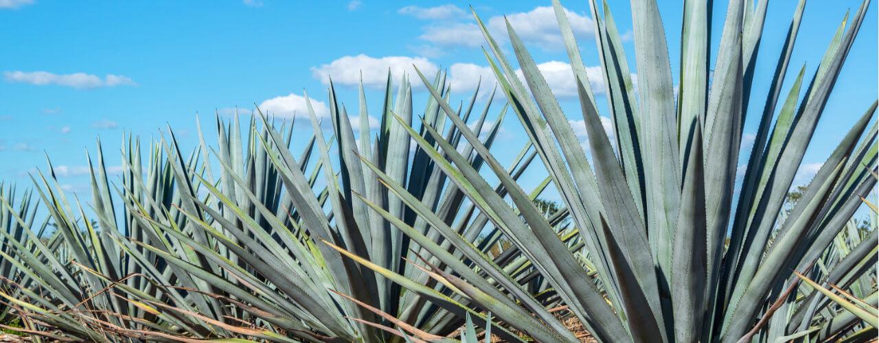 Årets utlandskurs i Mexico – Akumal